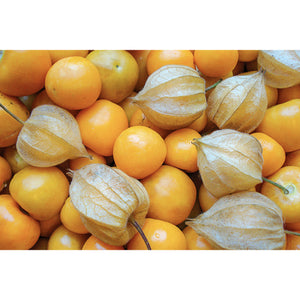 CAPE GOOSEBERRY; Schonbrunner Gold