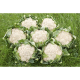 CAULIFLOWER; Nuage