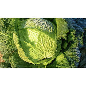 CABBAGE; SAVOY; Rearguard/Ormskirk