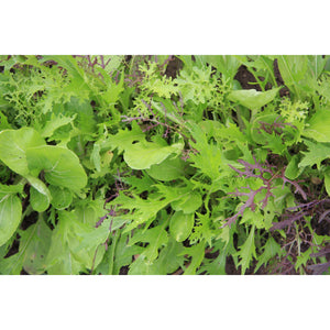 SALAD GREEN; Asian leaves mix