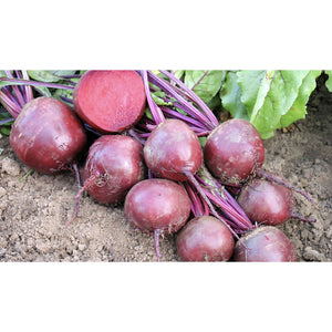 BEETROOT; Robuschka/Globe 2