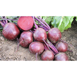 BEETROOT; Robuschka/Globe 2, graded monogerm