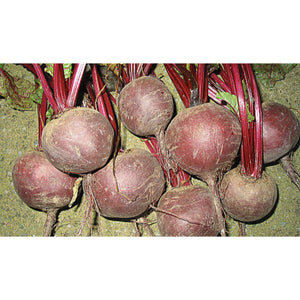 BEETROOT; Boltardy