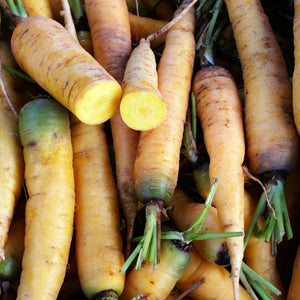 CARROT; Jaune du Doubs