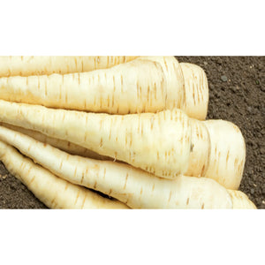 PARSNIP; Tender and True