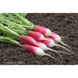 RADISH; French Breakfast 2