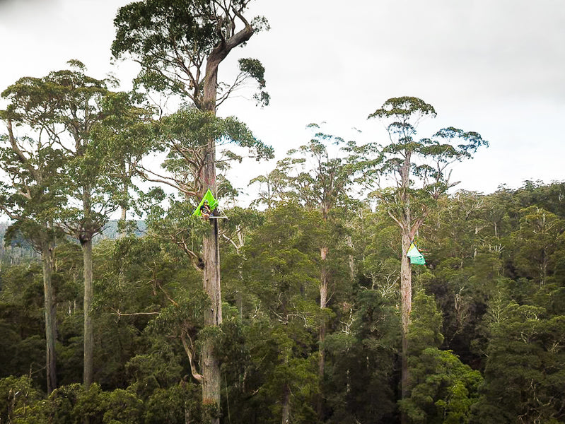 Bob brown Foundation Media Release: Global Canopy Campout to aid Australia's largest temperate rainforest in takayna / Tarkine