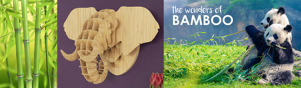 Head On Design Bamboo products