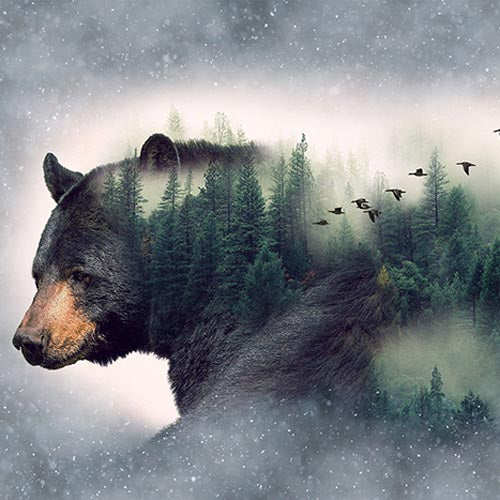 Call Of The Wild - Forest Bear