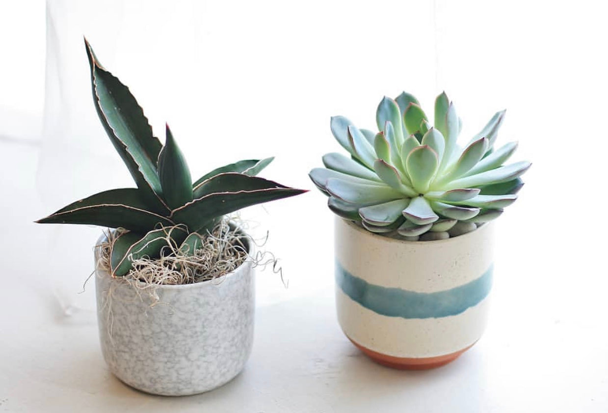 Caring for Your Cacti and Succulents