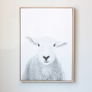 Peekaboo Sheep Framed Canvas Print