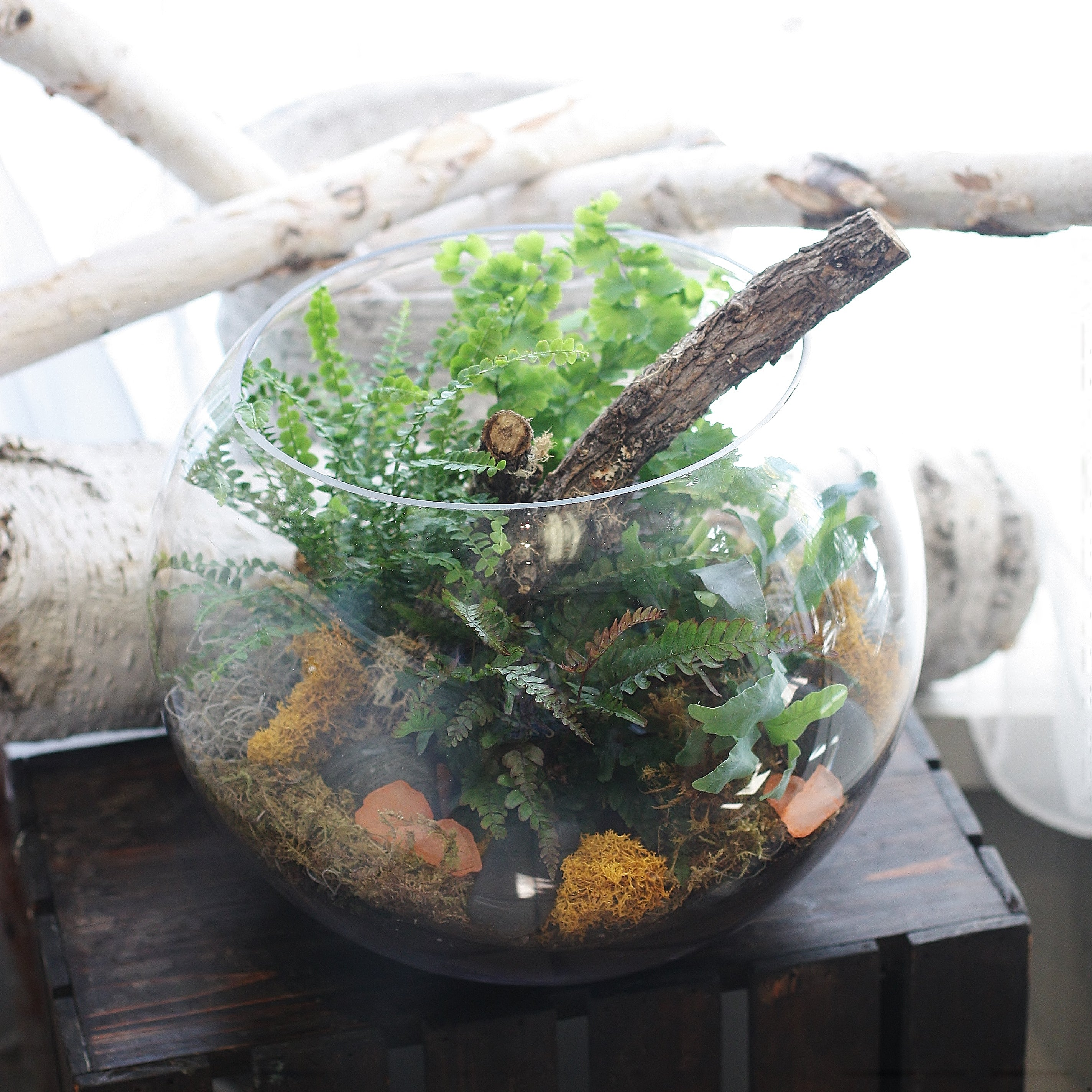 Autumn Fern Terrarium