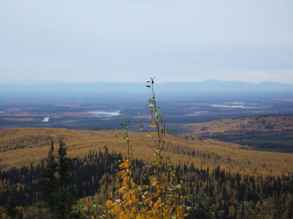Angel Rocks Trail - Chena River Valley