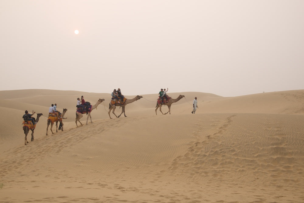 Camels at Damodra Desert Camp