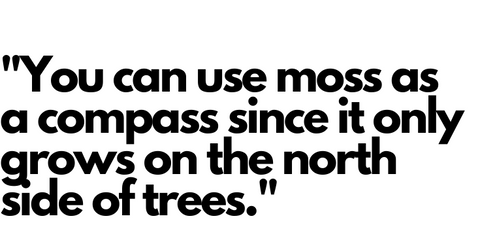 You can use moss as a compass since it only grows on the north side of trees