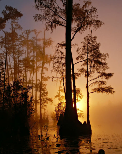 The Okefenokee Swamp, Georgia