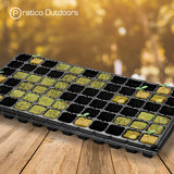grow cubes planted in tray