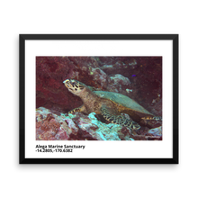 """Hawksbill Sea Turtle in Alega Marine Sanctuary"" Framed Photo Print"