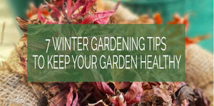 7 Winter Gardening Tips To Keep Your Garden Healthy