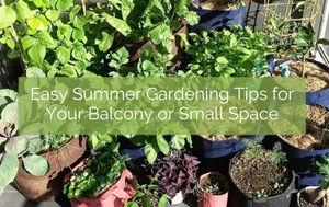 Easy tips for managing your Balcony garden in Summer