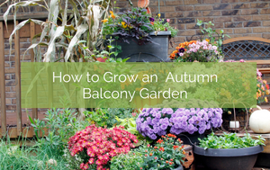 How to Grow an Autumn Balcony Garden
