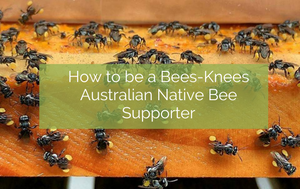 How to be a Bee's-Knees Australian Native Bee Supporter!