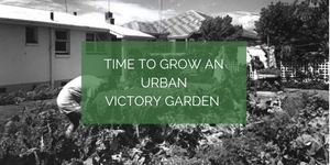 Time to grow an urban victory garden