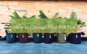How To Choose The Right Sized Pot For Your Plant
