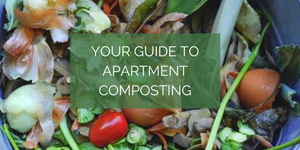 Your Guide to Apartment Composting