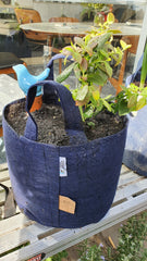 Blueberry in 16L bag