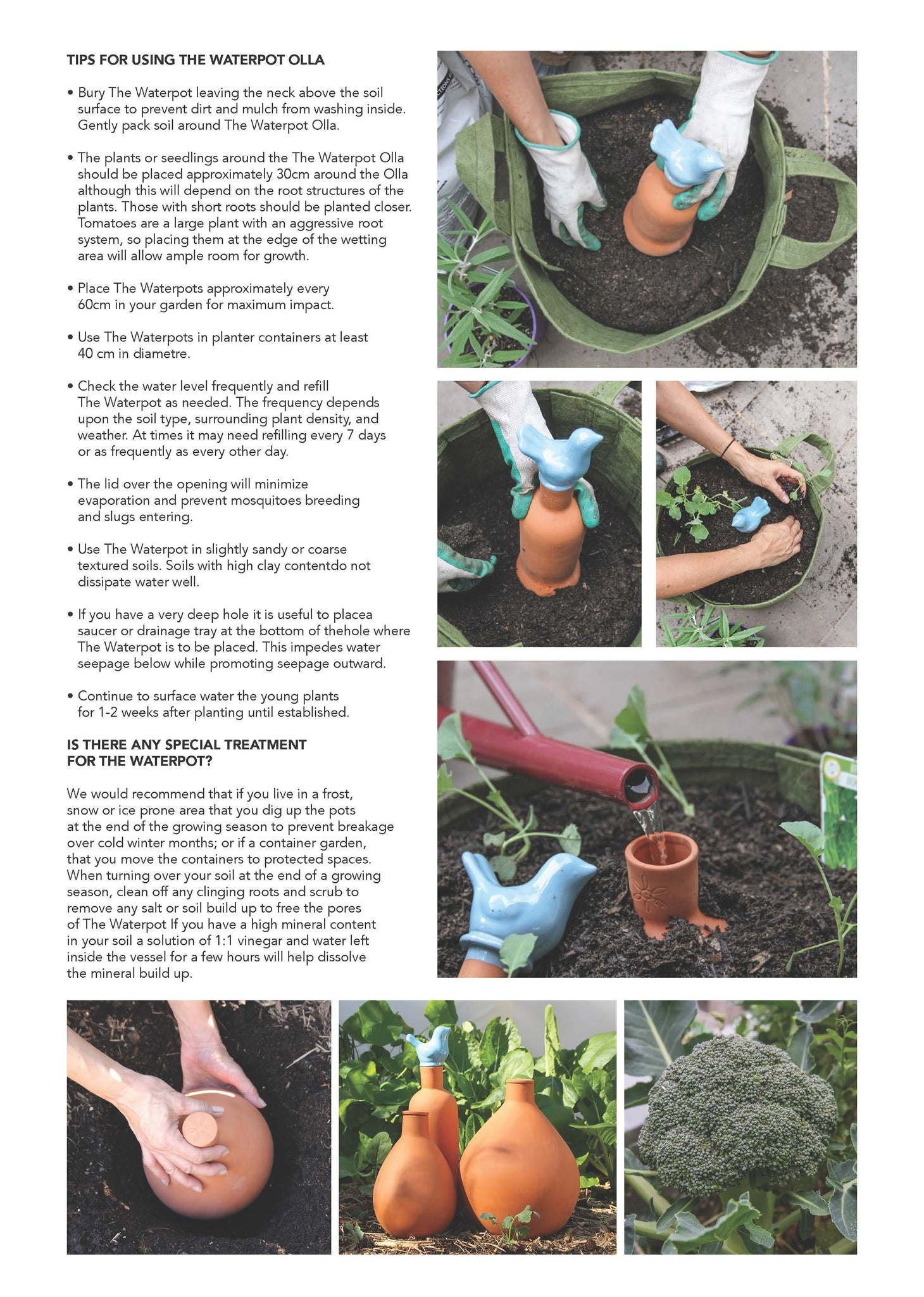 Instruction Sheet: How To Use Your Waterpot Olla In Your Garden