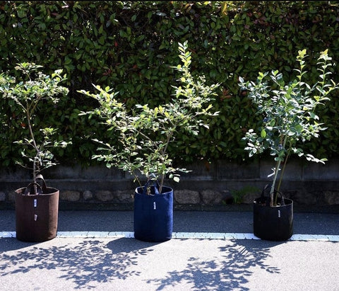 Root Pouch Grow Bags