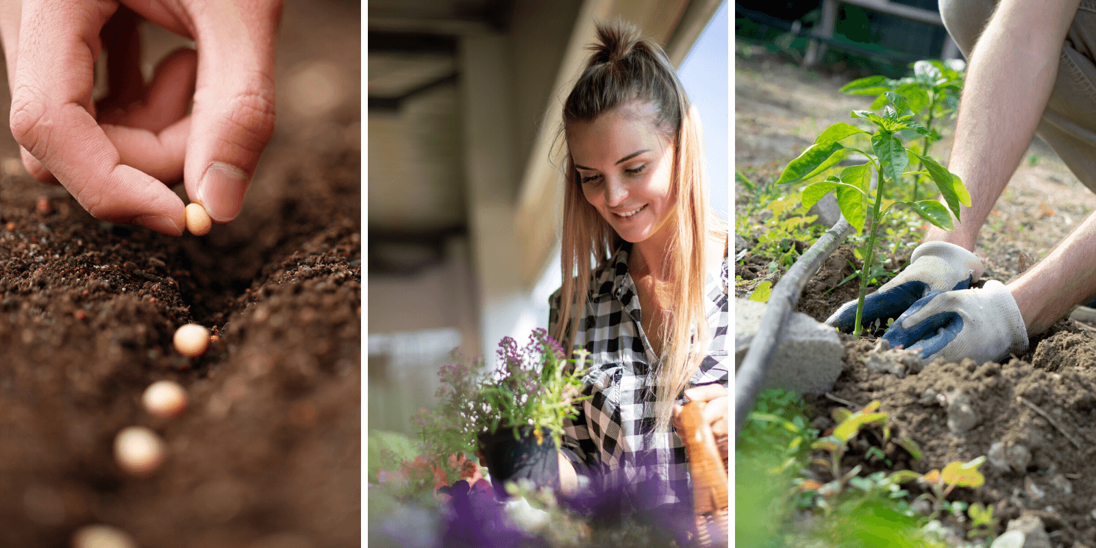 Sustainable Plant Selection For YourUrban Garden