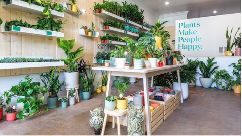 Retail store selling plants and garden related items
