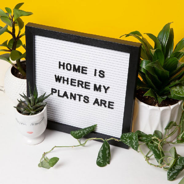 Home Is Where My Plants Are - image by sarahpflugphoto