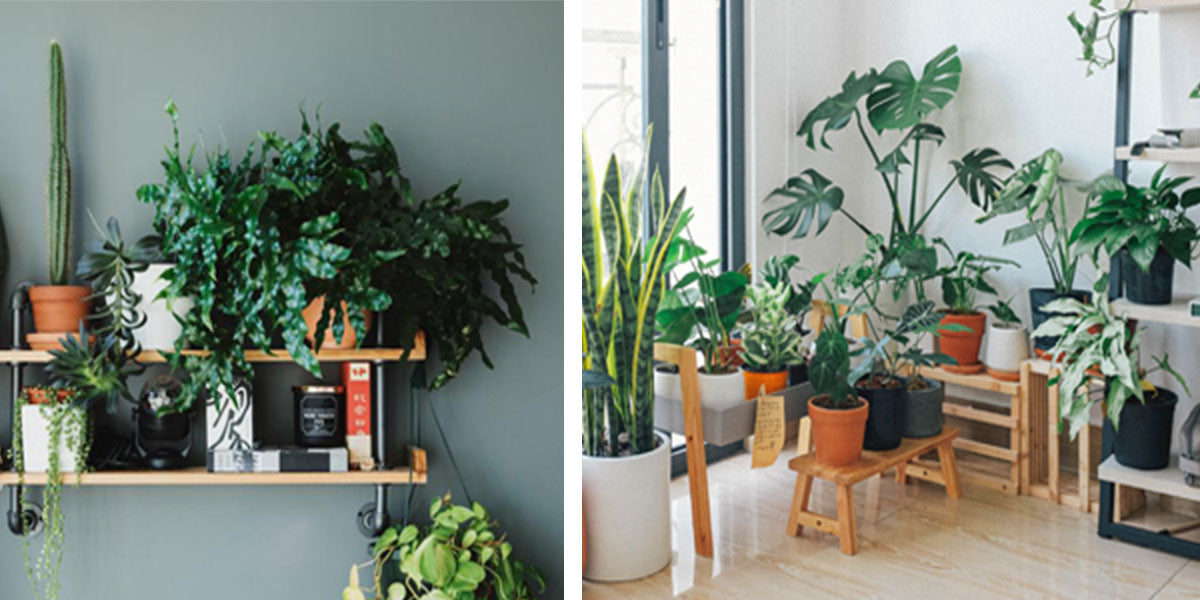 Indoor Plant Care - images by SarahPflug Photos & Huy Phan