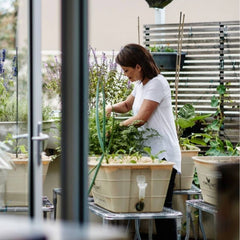 How to water your rooftop plants using waterpots
