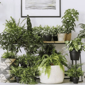 Indoor Plant Watering Made Easy