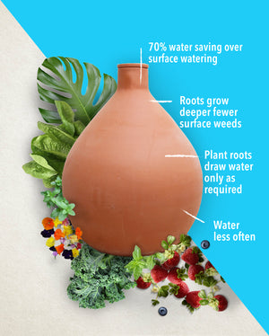Water Your Plants More Efficiently