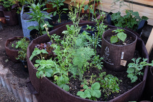 Root Pouch Garden Beds