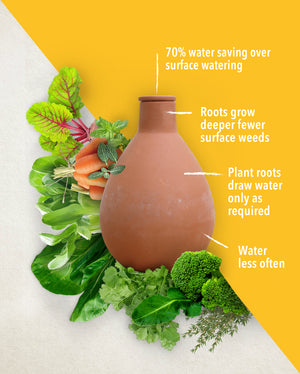 Small Waterpot Olla Benefits