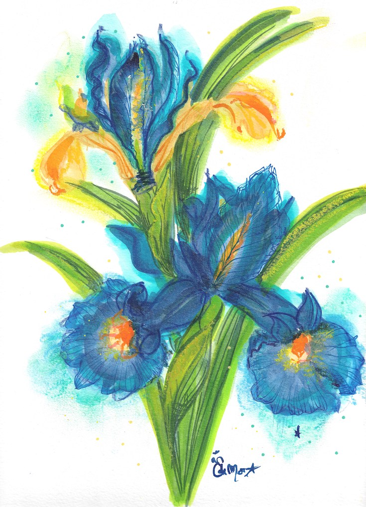 Iris bleu, Fleur Bleue, Blue Iris, Watercolor, Illustration