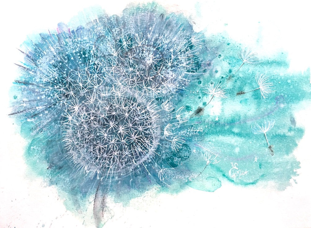 Pissenlit, Dandelion, Illustration, Watercolor