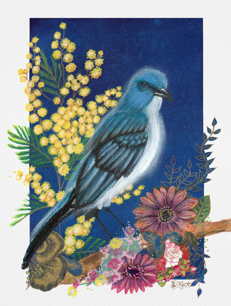 Blue Jay, illustration, mimosa,