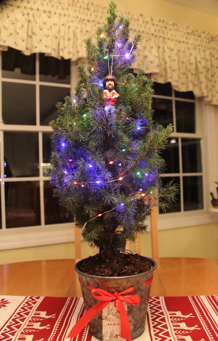 Bob Ross' Happy Little Christmas Tree - Buy Plants Online