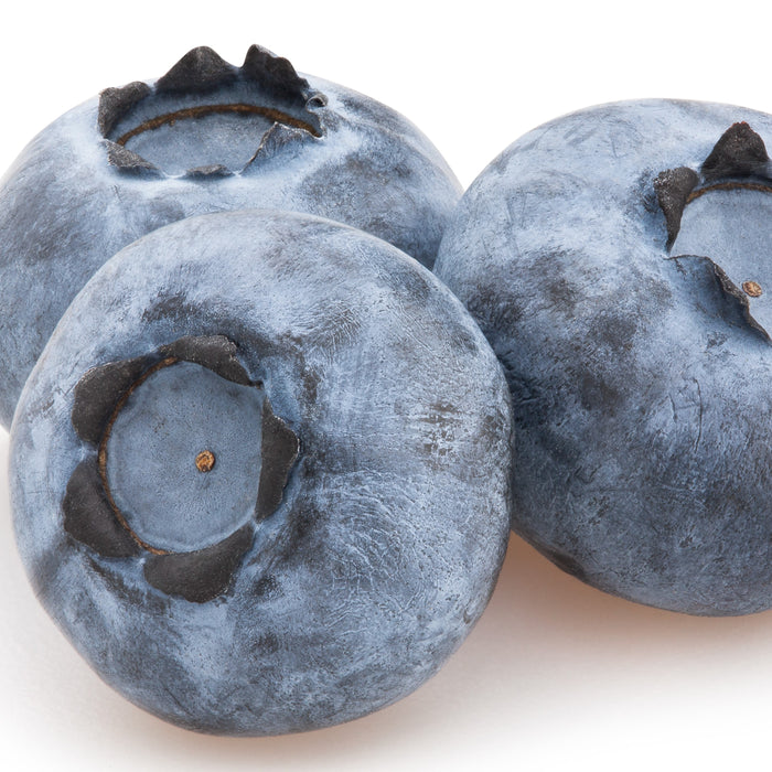 Bushel and Berry™ Perpetua™ Blueberry - Buy Plants Online