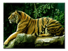 Tiger Animal Love - 1 panel - Royalty Express Hub