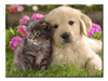 Cute Puppy & Kitten - 1 panel L - Royalty Express Hub