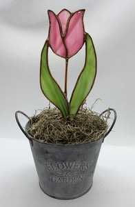 Tulip in Pot