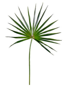 Faux Fan Palm Branch